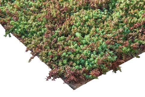 ZinCo Pflanzenmatte Sedum Kräuter vorkultivierte Vegetationsmatte