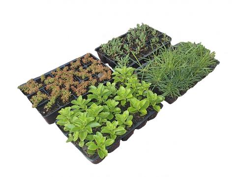 ZinCo Flachballenpflanzen FB4x15 Steinrosenflur 15 Pflanzen/4 Platten