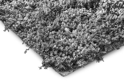 ZinCo Pflanzenmatte Sedum vorkultivierte Vegetationsmatte